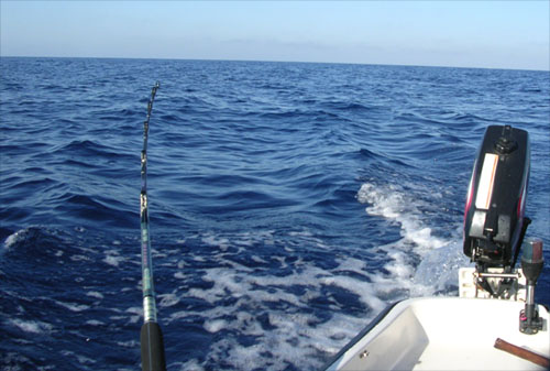 Trolling for Albacore in Filfla